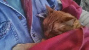 kitty sleeping, as usual