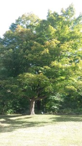 tree in the beginning of autumn